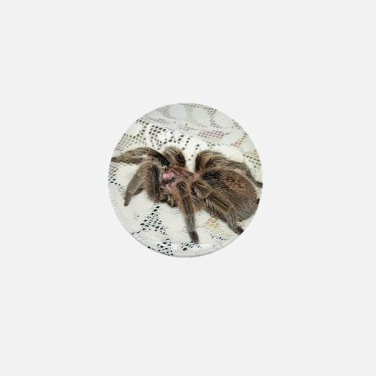Chilean Rose Tarantula Mini Button