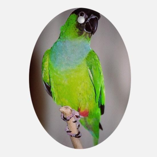 (13) Nanday Conure Oval Ornament