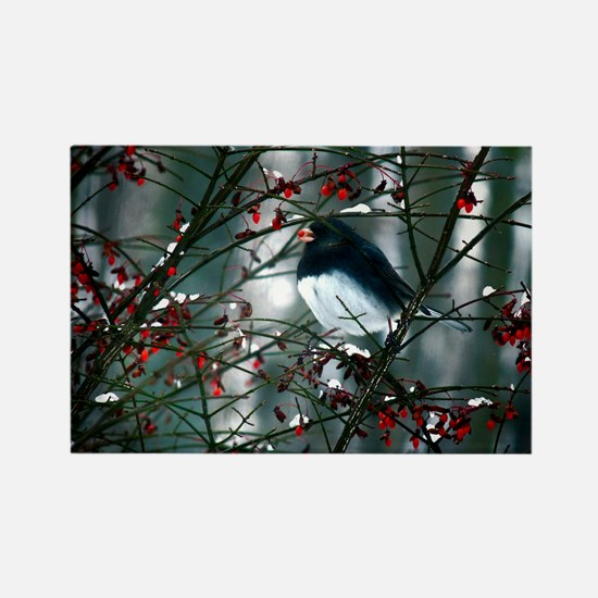 junco w berry  Rectangle Magnet