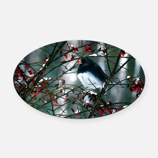 junco w berry  Oval Car Magnet
