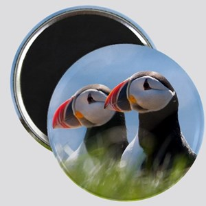 Puffin Pair 7.355x9.45 Magnet