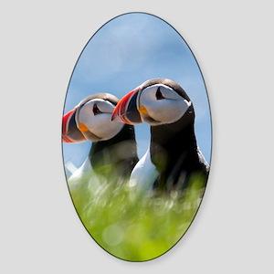Puffin Pair 7.355x9.45 Sticker (Oval)