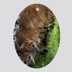 (13) Wallabies Oval Ornament