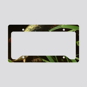 Koy Earth Reflection License Plate Holder