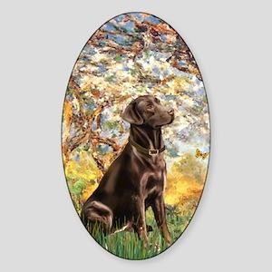Spring - Chocolate Lab 11 Sticker (Oval)