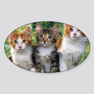 Tthree_kittens 16x16 Sticker (Oval)