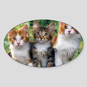 Tthree_kittens 16x16 Sticker (Oval)