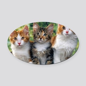 Tthree_kittens 16x16 Oval Car Magnet