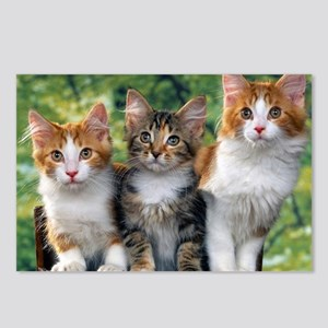 Tthree_kittens 16x16 Postcards (Package of 8)