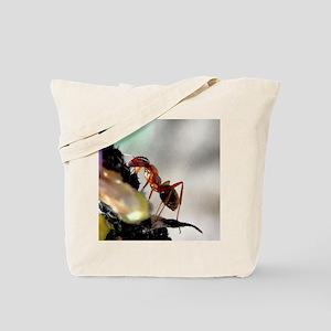 BEACH 9-1-10 114b1cr Tote Bag