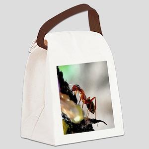 BEACH 9-1-10 114b1cr Canvas Lunch Bag