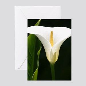 CallaLilySquare Greeting Card