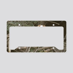 Bird Crazy3x6 License Plate Holder