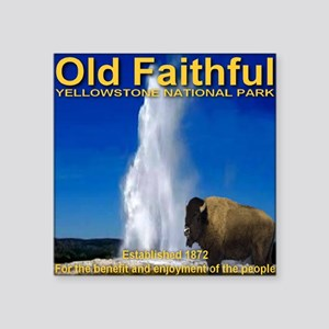 "Old_faithful_bison Square Sticker 3"" x 3"""