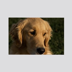 (2) golden retriever head shot Rectangle Magnet