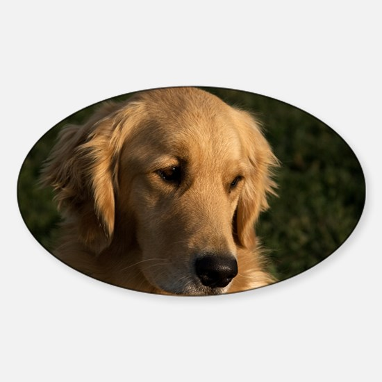 (2) golden retriever head shot Sticker (Oval)