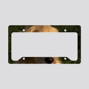 (2) golden retriever head sho License Plate Holder