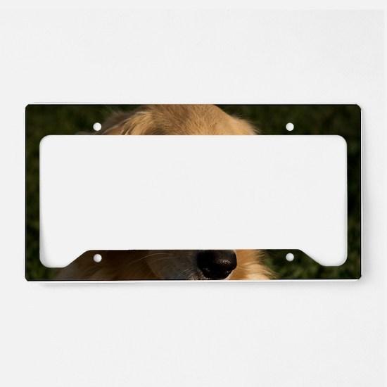 (2) golden retriever head sho License Plate Holder