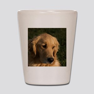 (15) golden retriever head shot Shot Glass