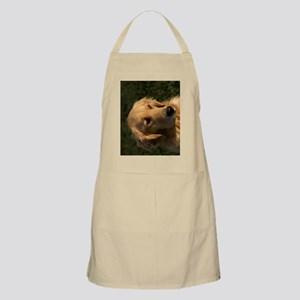 (9) golden retriever head shot Apron