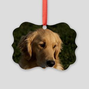 (10) golden retriever head shot Picture Ornament