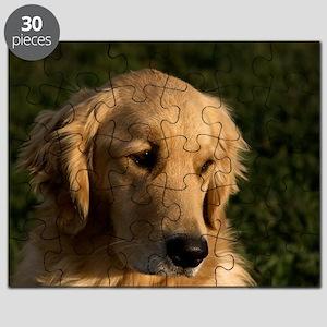 (10) golden retriever head shot Puzzle