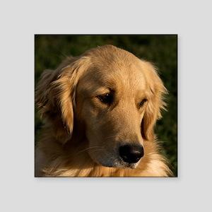 "(15s) golden retriever head Square Sticker 3"" x 3"""