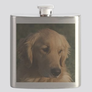 (15s) golden retriever head shot Flask