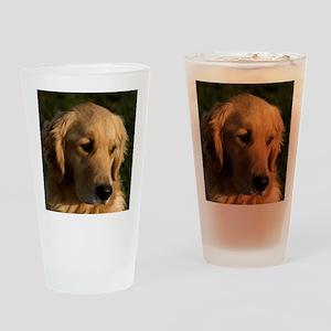 (15s) golden retriever head shot Drinking Glass