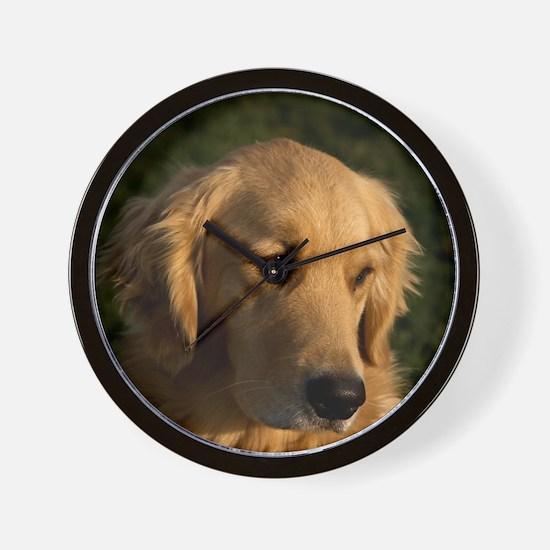 (14) golden retriever head shot Wall Clock