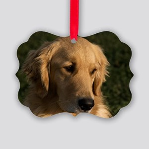 (12) golden retriever head shot Picture Ornament