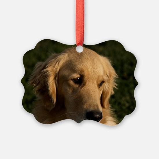 (12) golden retriever head shot Ornament