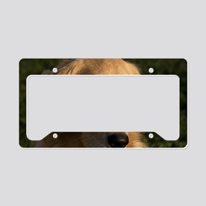 (12) golden retriever head sh License Plate Holder
