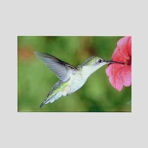 Hummingbird 7 Rectangle Magnet