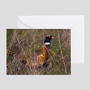 (3) Pheasant  407 Greeting Card
