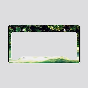 Terawera-Falls-River-183-14 m License Plate Holder