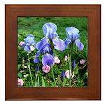 Iris and Antique Roses Framed Tile