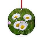 Wild Daisy Ornament (Round)