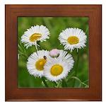 Wild Daisy Framed Tile