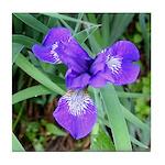Siberian Iris Tile Coaster