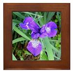 Siberian Iris Framed Tile