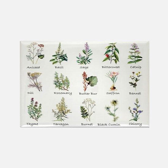 Herbs and Spices Illustrated Rectangle Magnet