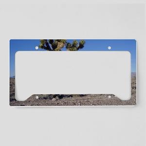Joshua Tree 1 License Plate Holder