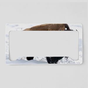 1 Bison Snow License Plate Holder