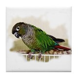 Green conure Coasters