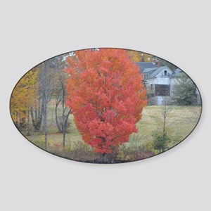 DSC_0034poster Sticker (Oval)