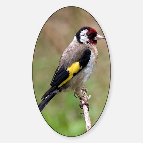 goldfinch3 Sticker (Oval)