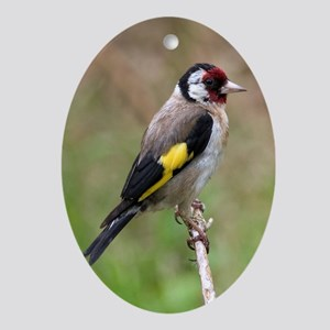goldfinch3 Oval Ornament