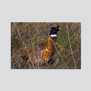 (6) Pheasant  407 Rectangle Magnet