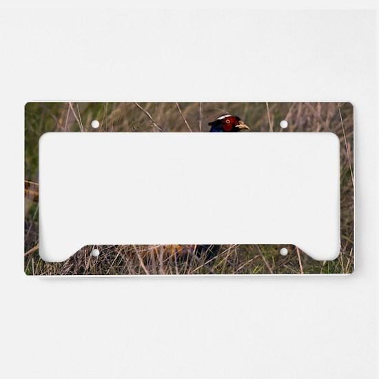 (6) Pheasant  407 License Plate Holder
